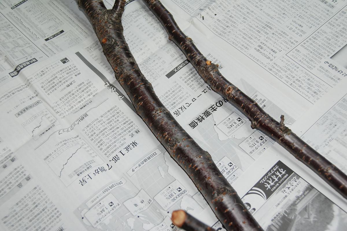 草木染め・剪定された桜の枝