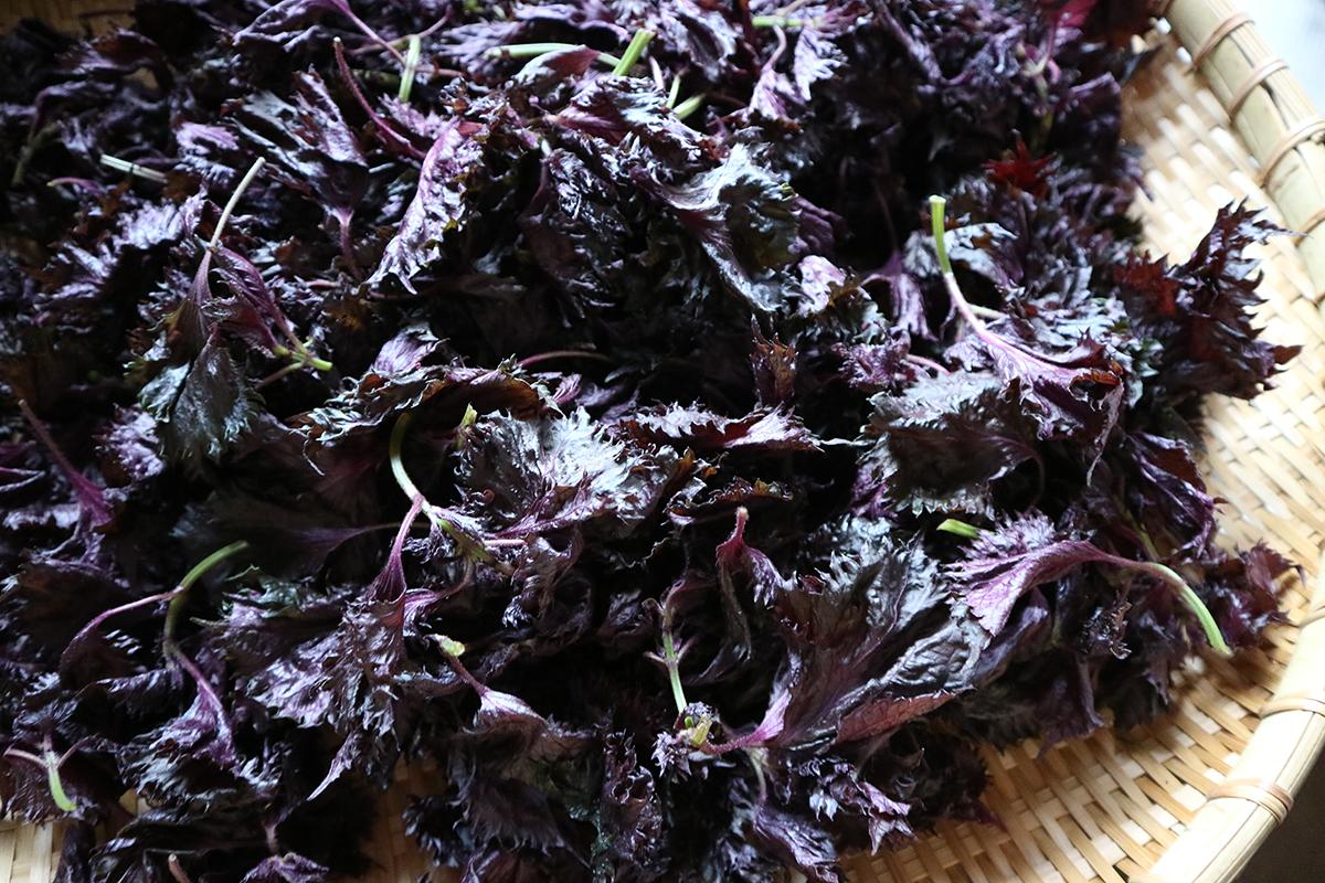赤紫蘇シロップ