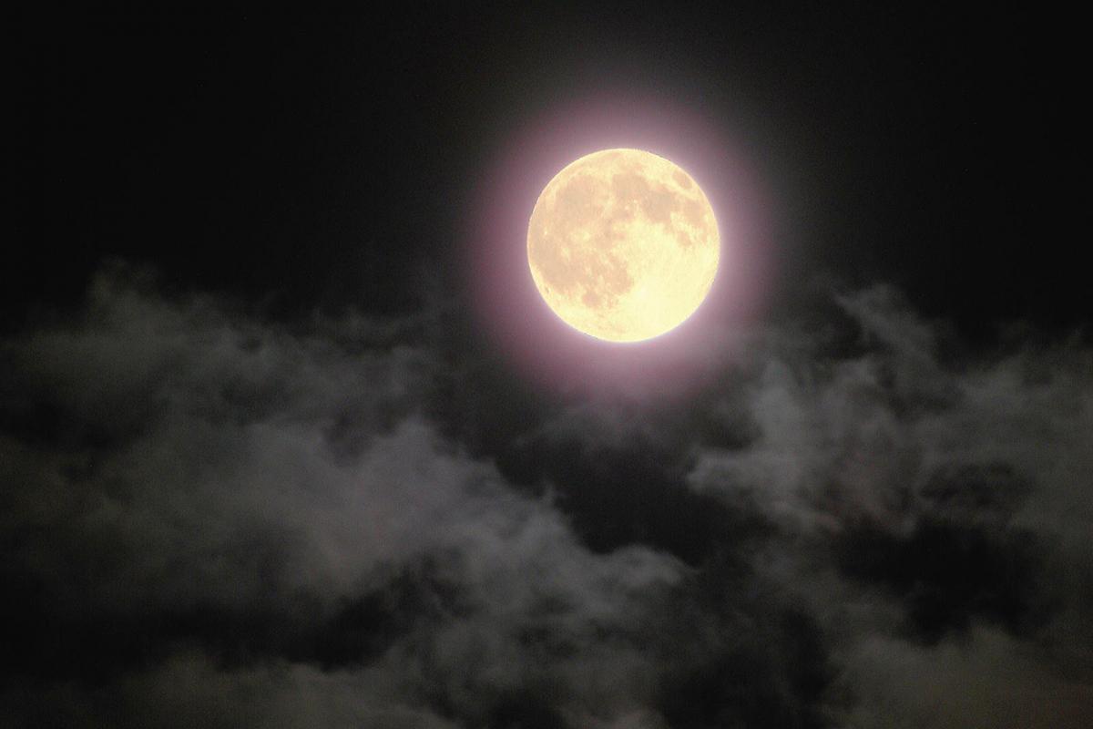 お月見・十五夜